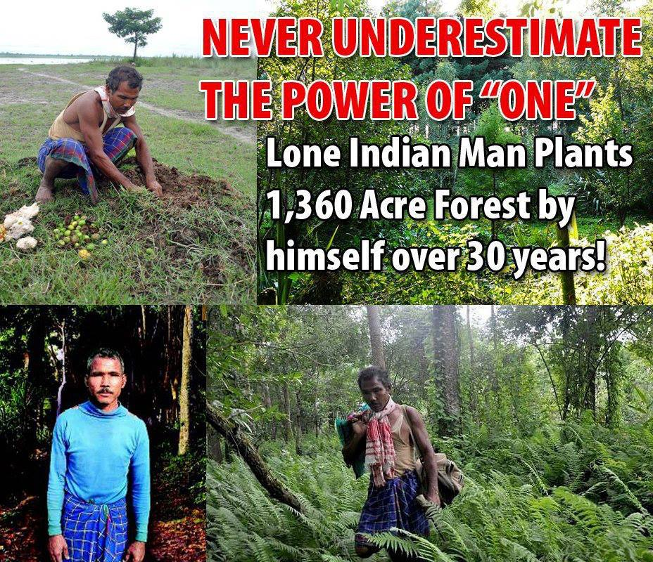 save the world one tree at a time